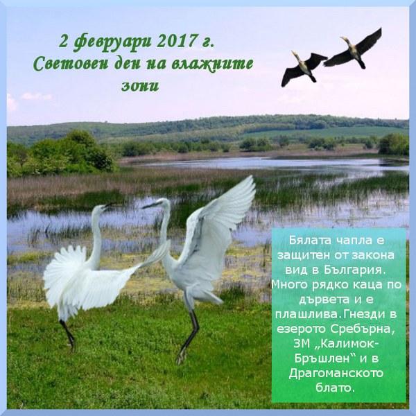 banner_boryana_600x600